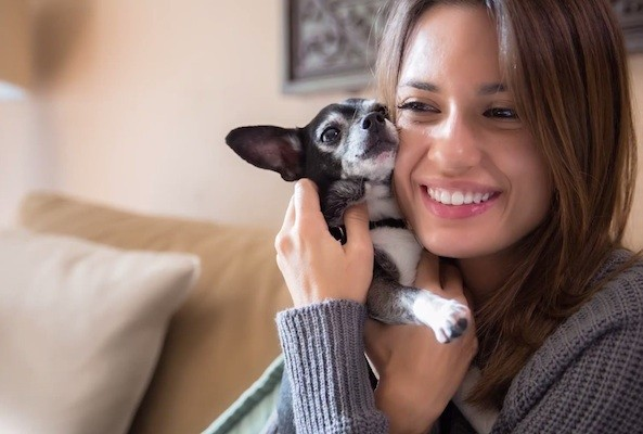 torrey devitto dog