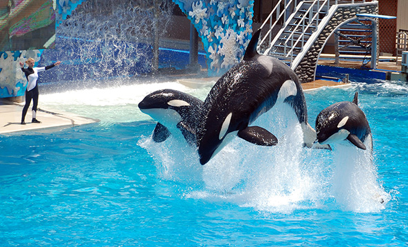 Blackstone will sell millions of dollars worth of SeaWorld stocks in wake of Blackfish documentary
