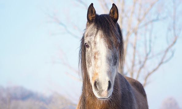 New bill will end horse slaughter in the United States