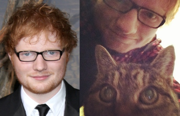 ed sheeran rescue cat