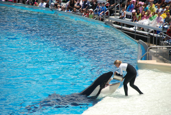 The memoir of John Hargrove, the former SeaWorld trainer who was prominently featured in the 2013 documentary, Blackfish, might soon become a movie.