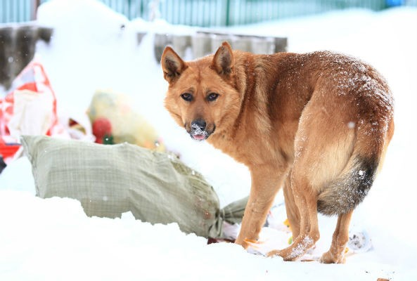 Stray dogs killed in Sochi for Winter Olympic Games