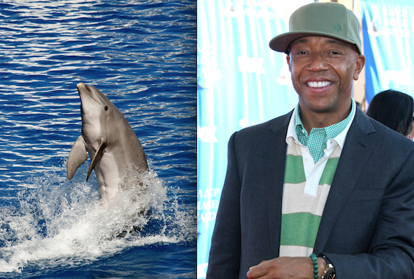 celebrities dolphins taiji