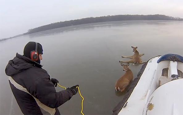hovercraft rescue deer