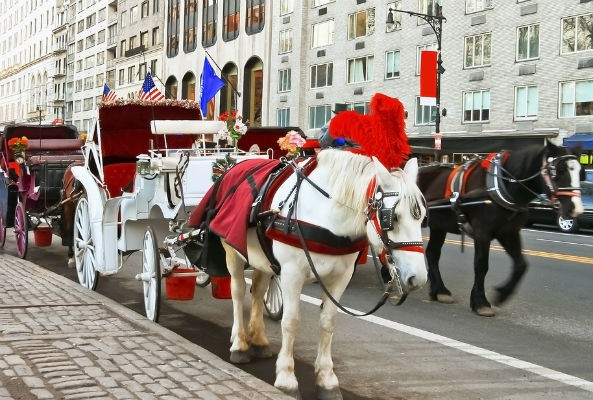 Chicago may ban horse drawn carriages