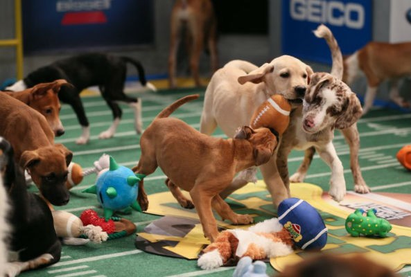 Puppy Bowl X stars raise money for animal shelter