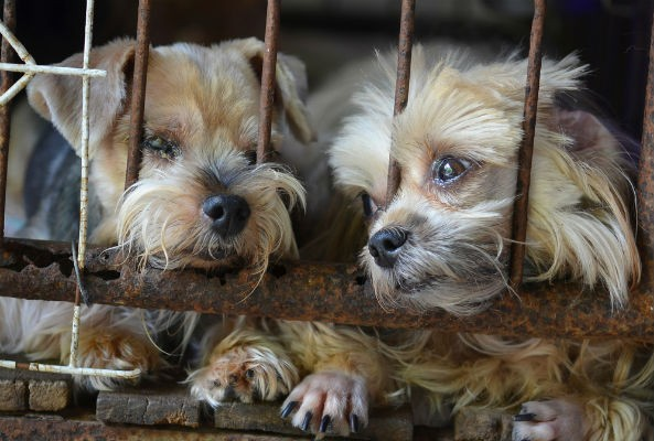 Petition Aims to Ban Puppy Mills in Chicago