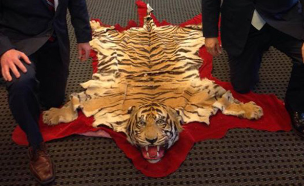 Senator Ted Cruz posted photo with tiger skin rug and created a whirlwind of harsh criticism