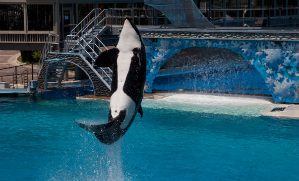 SeaWorld stock sinks