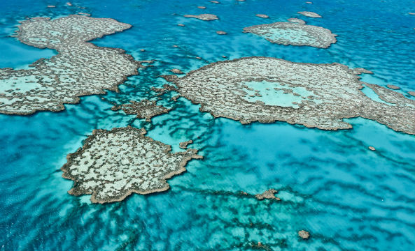 David Attenborough to make 3D documentary on the great barrier reef