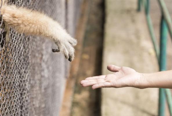 animal personhood