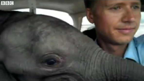 First video footage of Max the baby elephant is revealed