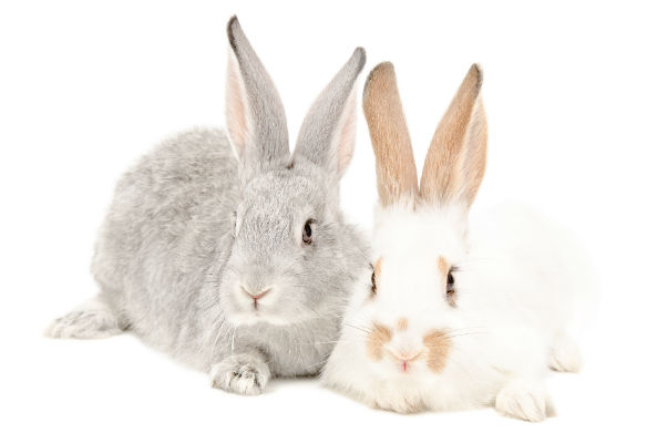 Canadian celebrities like Tricia Helfer and Bif Naked are imploring the Canadian government to support legislation to end cosmetics testing on animals.