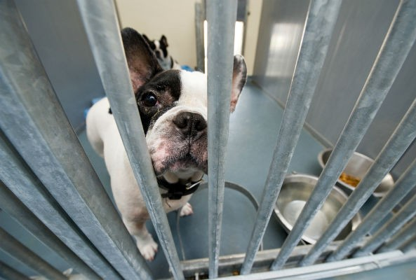 animal shelter workers suffer from compassion fatigue
