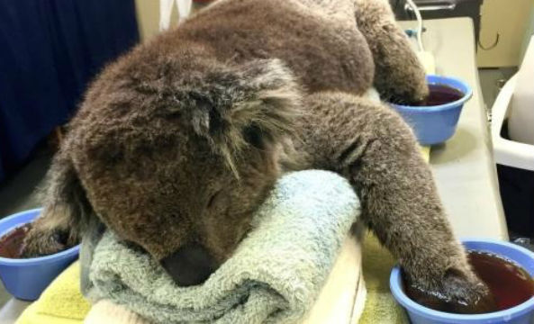 It's been a year since Jeremy the koala's photo of him receiving treatment for second-degree burns went viral.