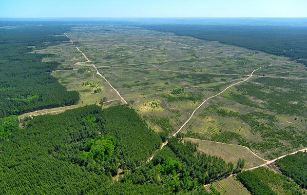 McDonald's Has Helped Slow Amazon Rainforest Deforestation : Ecorazzi