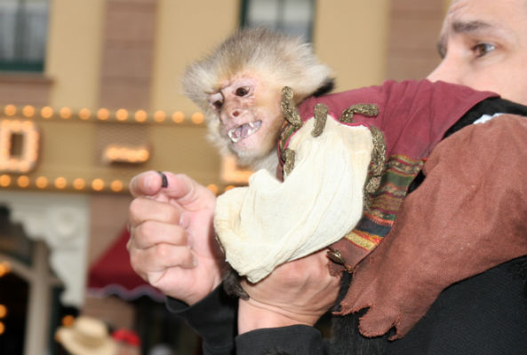 monkey at pirates of the caribbean premiere
