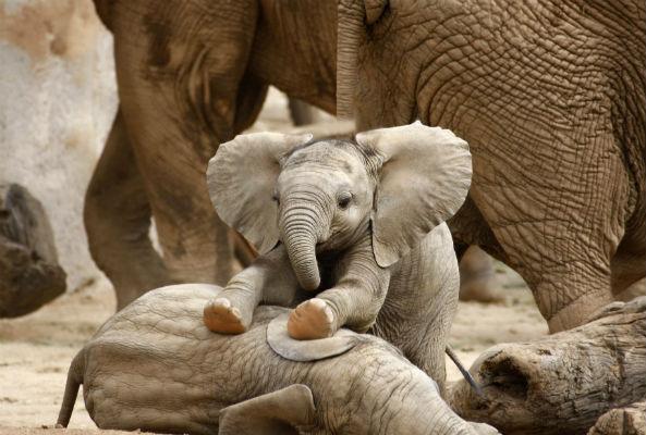 protect elephants
