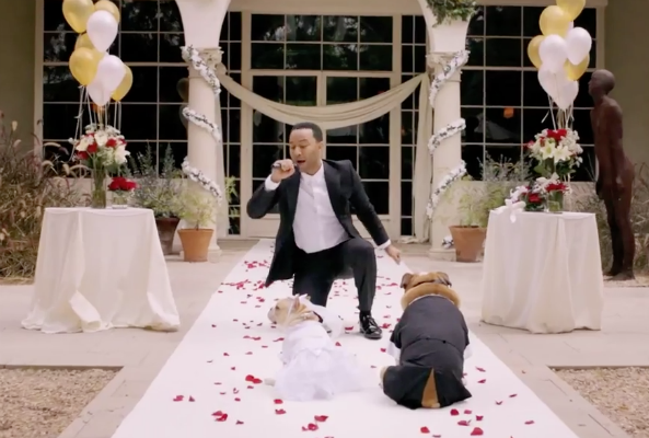 John Legend will sing at your dog's wedding for charity