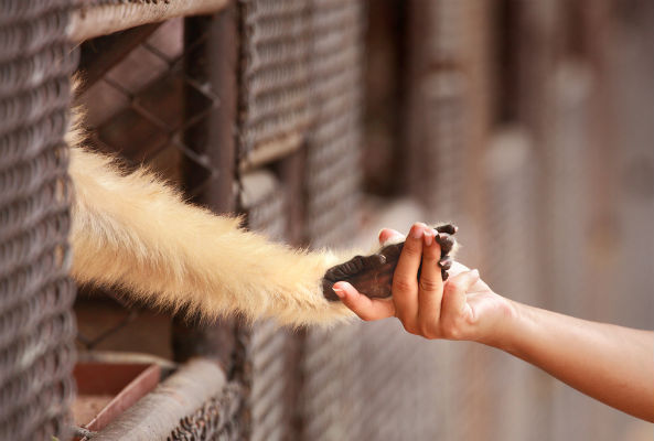 more americans want equal rights for animals and humans