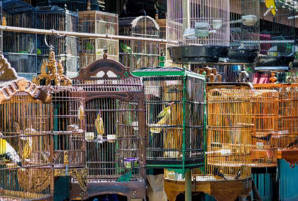 indian court rules that birds have the fundamental right not to be kept in cages