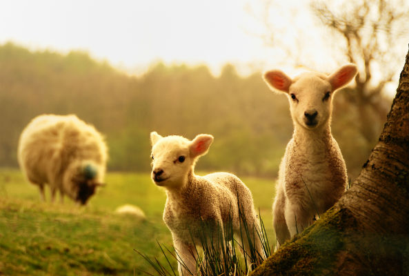 "New Zealand just took a huge a step forward for animal welfare by legally recognizing them as ""sentient"" beings."