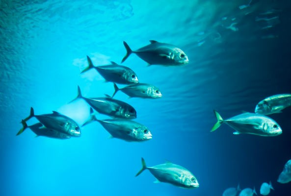 Just another reason to avoid eating pescatarian: a new study has found that fish have emotions.