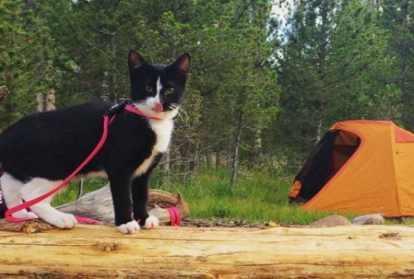 Laura Moss created AdventureCats.org, which helps people learn how to safely take their cats outdoors.