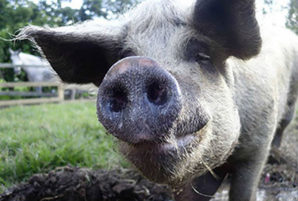 Juliana's Animal Sanctuary, the only no-kill animal sanctuary in Colombia, is asking for donations through its new crowd funding campaign.