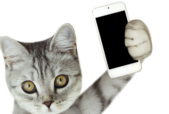 Now There S A Cellphone Just For Your Cat Ecorazzi