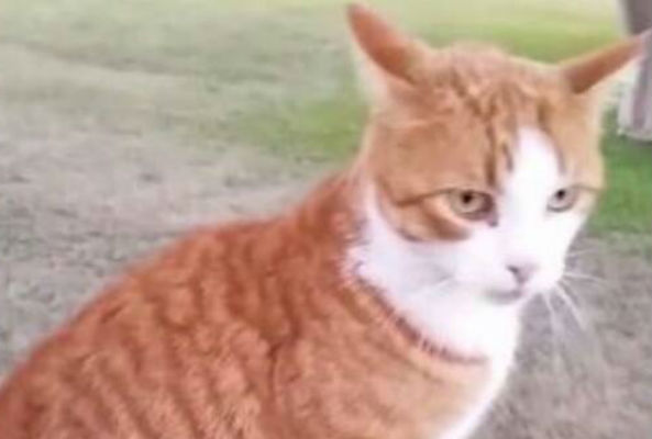 The Texas Board of Veterinary Medical Examiners (TVMEB) has moved to revoke the license of a veterinarian who murdered a tabbycat with a bow and arrow.