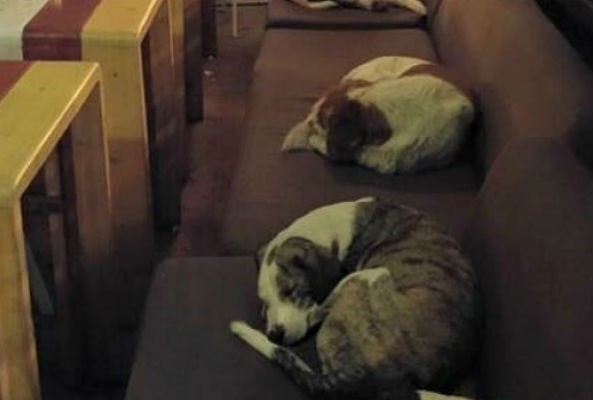 Each day a cafe in Mytilene, Greece close its doors, only to reopen them again at 3 a.m. for the city's stray dogs.