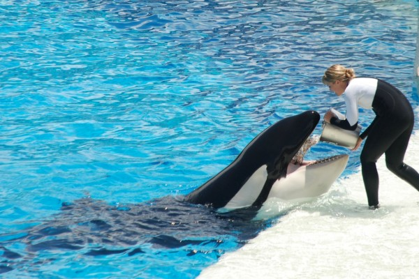 23296c5da17 SeaWorld admits workers were sent into PETA   Ecorazzi