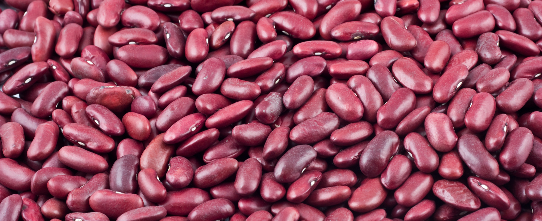 Trading beef for beans is not a solution, veganism is : Ecorazzi